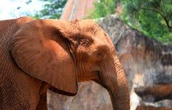 Afrykańscy słonie Fotografia Stock