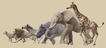 afrykańscy zwierzęta ilustracji