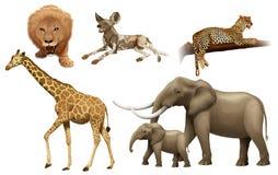 Afrykańscy zwierzęta Fotografia Royalty Free