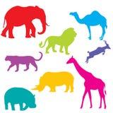 afrykańscy zwierzęta ustawiają ilustracja wektor