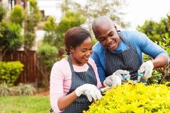 Afrykańska para przycina rośliny Zdjęcia Stock