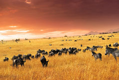 afrykańska przyroda Obraz Royalty Free
