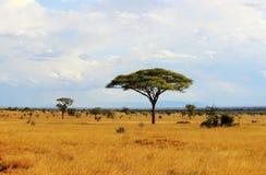 Afrykańska sawanna Obrazy Royalty Free