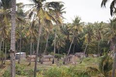 Afrykańska wioska między drzewkami palmowymi w Tofo Fotografia Royalty Free