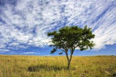 afrykański drzewo Obrazy Royalty Free