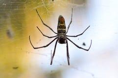Afrykański pająk rozmiar ręka Zdjęcia Stock