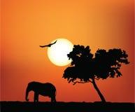 afrykański słoń ilustracji