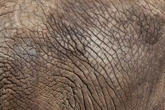afrykański słoń loxodonta africana krzaka tileable skóry bezszwowa tekstura Zdjęcie Stock