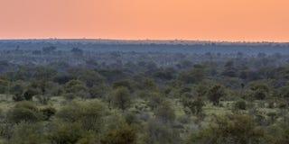 Afrykański Sawannowy prosty przegląd przy zmierzchem fotografia stock
