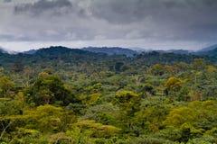 Afrykański tropikalny las deszczowy fotografia royalty free