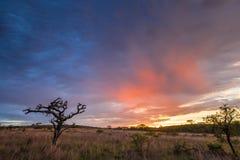 Afrykański wschód słońca Południowa Afryka Fotografia Stock