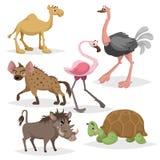 Afrykański zwierzę kreskówki set Wielbłąd, duży afrykański żółw, flaming, hiena, warthog i struś, Zoo przyrody kolekcja Wektorowy ilustracji