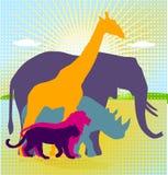 afrykański zwierzęcy królestwo ilustracji