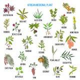 Afrykańskie lecznicze rośliny Fotografia Royalty Free