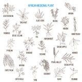 Afrykańskie lecznicze rośliny Obrazy Royalty Free