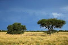 Afrykańskie równiny obraz royalty free