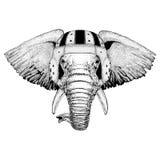 Afrykańskiego lub indyjskiego słonia dzikie zwierzę jest ubranym rugby hełma sporta ilustrację Fotografia Royalty Free