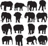 Afrykańskiego słonia i azjatykciego słonia sylwetki kontur Zdjęcia Stock