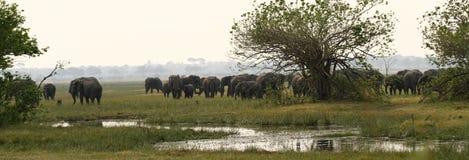 Afrykańskiego słonia safari scena Obraz Stock