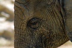 Afrykańskiego słonia skóra Zdjęcia Stock