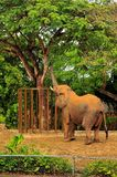 afrykańskiego słonia vertical Obraz Royalty Free