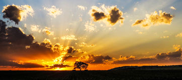 Afryka drzewa zmierzch Zdjęcia Stock