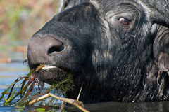 Afryka dziki życie Obrazy Royalty Free