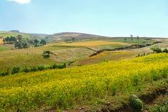 Afryka, Etiopia. Krajobraz Afrykańska natura. Góry, va Zdjęcie Stock