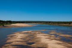 Afryka hyppo rzeka Zdjęcia Stock