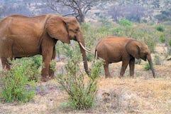 Afryka, Kenja Obrazy Royalty Free