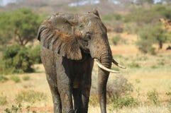 Afryka, Kenja, zoologia Obrazy Stock