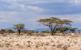 Afryka krajobraz Zdjęcie Royalty Free