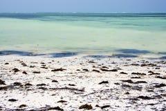 Afryka linia brzegowa błękitna laguna relaksuje Zanzibar Zdjęcie Royalty Free