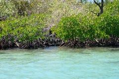 Afryka, malowniczy aera błękit zatoka blisko Mahebourg Zdjęcia Stock