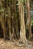 Afryka, malowniczy teren Mont Choisy w Mauritius Zdjęcie Royalty Free