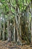Afryka, malowniczy teren Mont Choisy w Mauritius Zdjęcie Stock