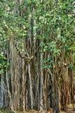 Afryka, malowniczy teren Mont Choisy w Mauritius Obraz Stock