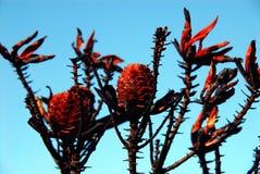 Afryka Palił Fynbos Blisko Capetown, Południowa Afryka zdjęcie stock