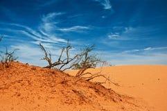 Afryka, piaskowaci barkhans Obrazy Stock