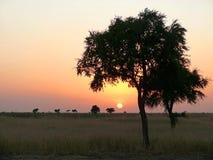 Afryka. Południowo-zachodni Sudan. Zmierzch. Krajobrazowa natura. Obraz Royalty Free