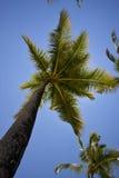 Afryka przodu palmy główne atrakcje Fotografia Royalty Free