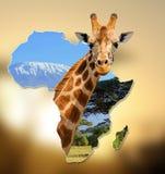 Afryka przyrody mapy projekt Zdjęcie Royalty Free