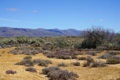 Afryka safari krajobraz z rzeki, łąki i góry backgrou, Zdjęcie Stock