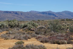 Afryka safari krajobraz z rzeki, łąki i góry backgrou, Zdjęcie Royalty Free