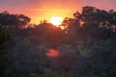 Afryka Sawannowy wschód słońca Nad drzewami Obraz Royalty Free