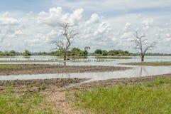 Afrykańscy krajobrazy - Selous gry rezerwa Tanzania Zdjęcia Royalty Free