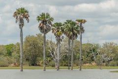 Afrykańscy krajobrazy - Selous gry rezerwa Tanzania Obrazy Royalty Free
