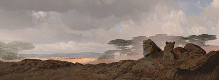 afrykańscy lwy dwa Obrazy Royalty Free