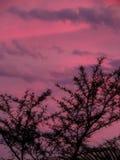 Afrykańscy nieba 5 Obrazy Royalty Free
