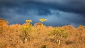 afrykańscy nieba Zdjęcia Stock